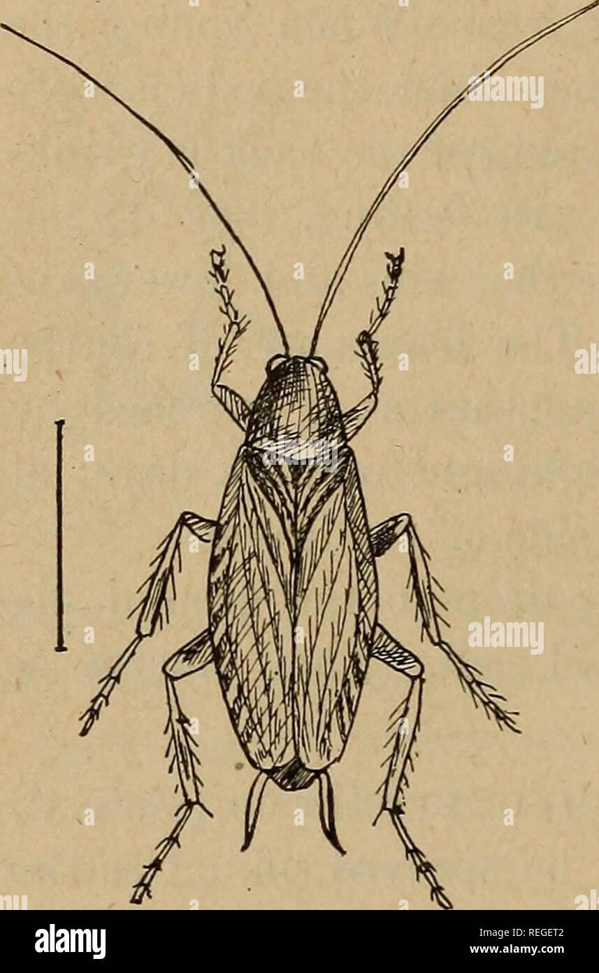 Piccoli Scarafaggi In Cucina comune di insetti pregiudizievole del kansas. pesti di