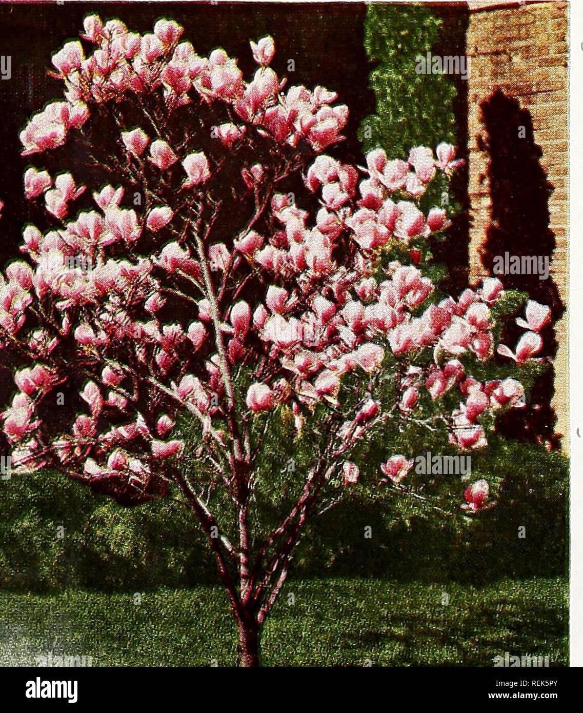Rampicanti Che Crescono All Ombra c. m. hobbs & figli. vivai orticoli cataloghi; sempreverdi