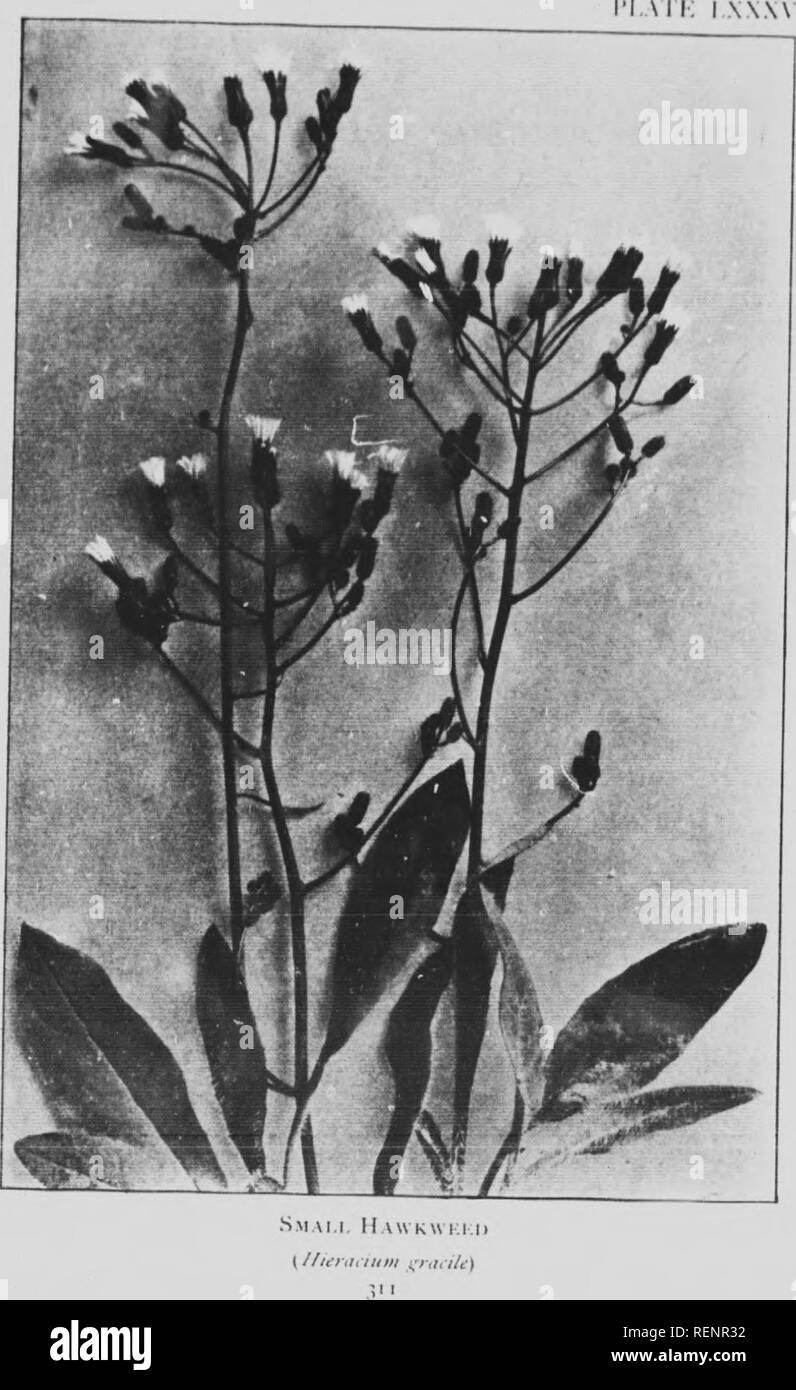 Fiori Selvatici Foto E Nomi montagna fiori selvatici del canada [microformati] : una