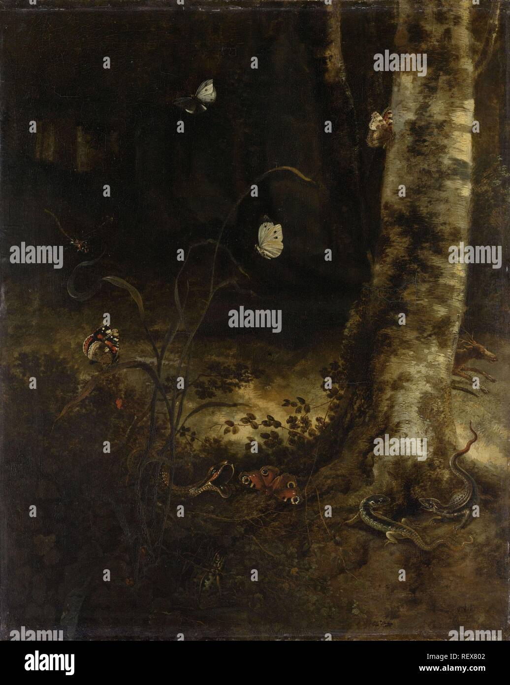 Forest Floor con un serpente, lucertole, farfalle e altri insetti. Dating: 1650 - 1678. Misurazioni: h 76 cm × W 62 cm; d 11,5 cm. Museo: Rijksmuseum Amsterdam. Autore: Otto Marseus van Schrieck. Foto Stock