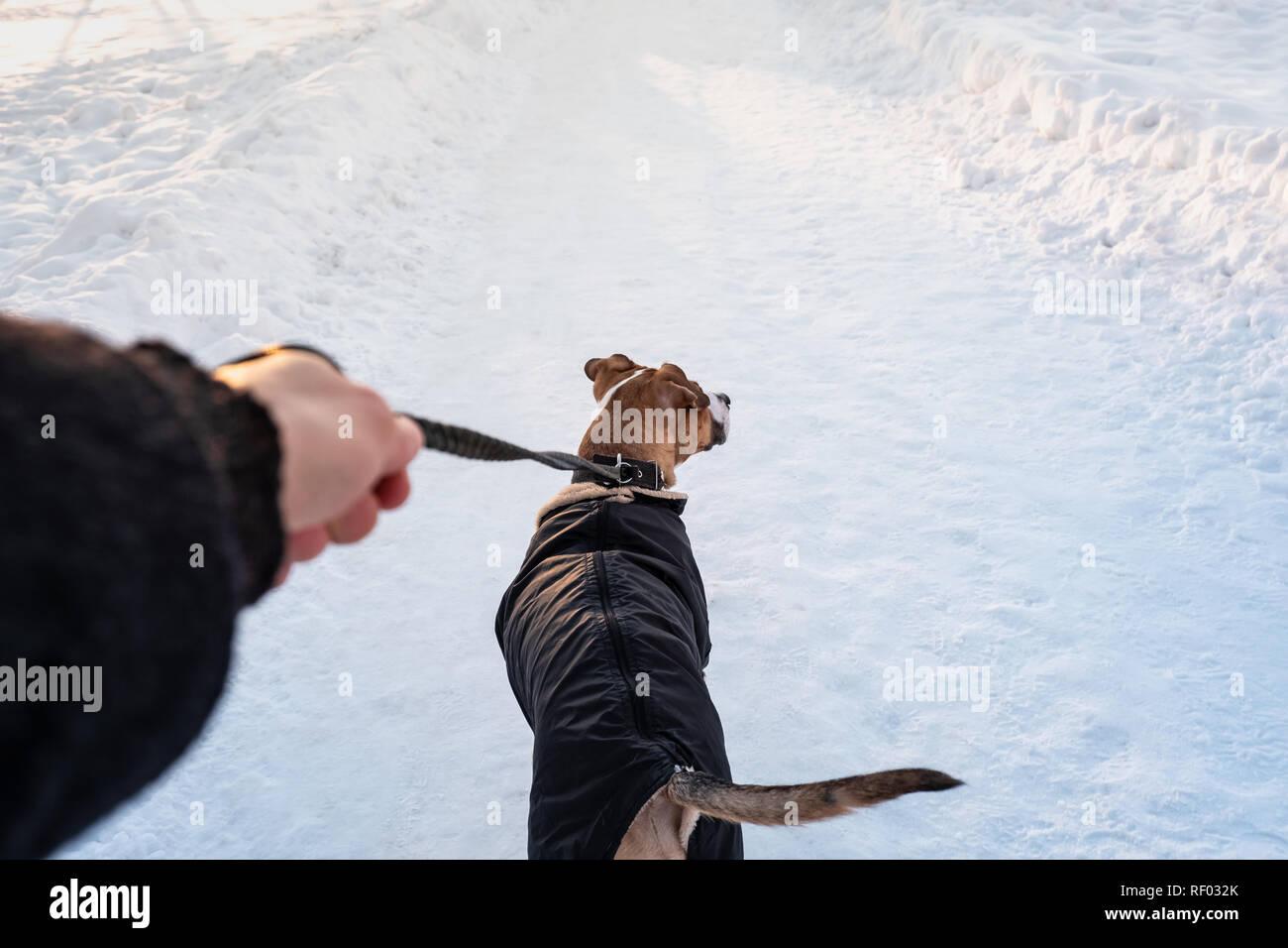 A piedi con un cane in mano su freddo giorno d'inverno. Persona con un cane in giacca calda al guinzaglio in un parco , proprietario del punto di vista Foto Stock