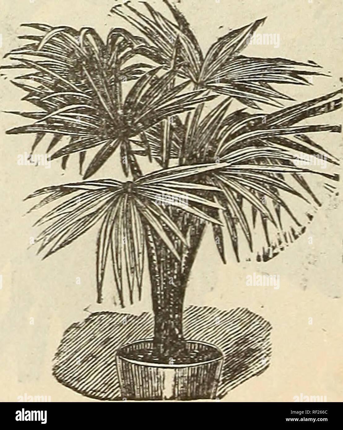 Piante Da Frutto Sempreverdi catalogo di alberi da frutto, sempreverdi, rose, ecc. vivai