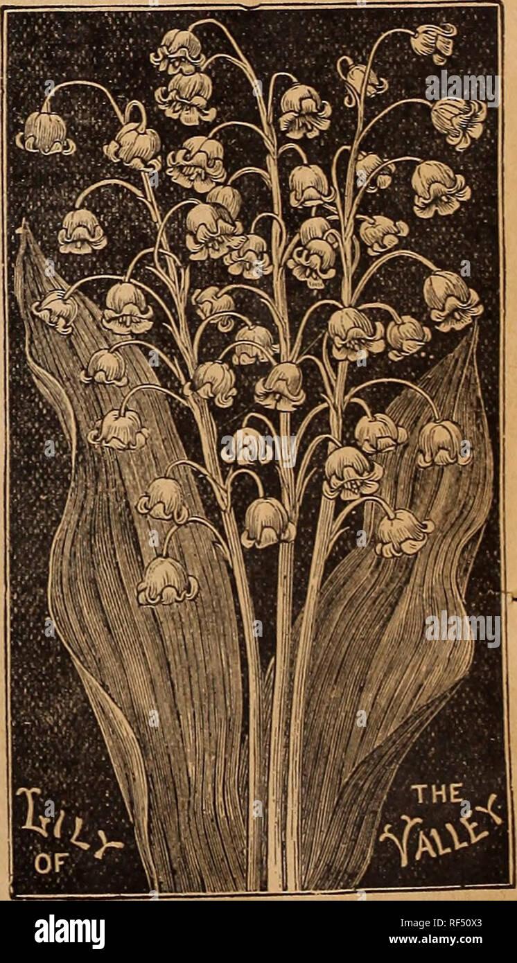 Fiori Bianchi Leggeri.Fratelli Alneer Seme E Pianta Catalogo Per 1898 Vivaio Illinois