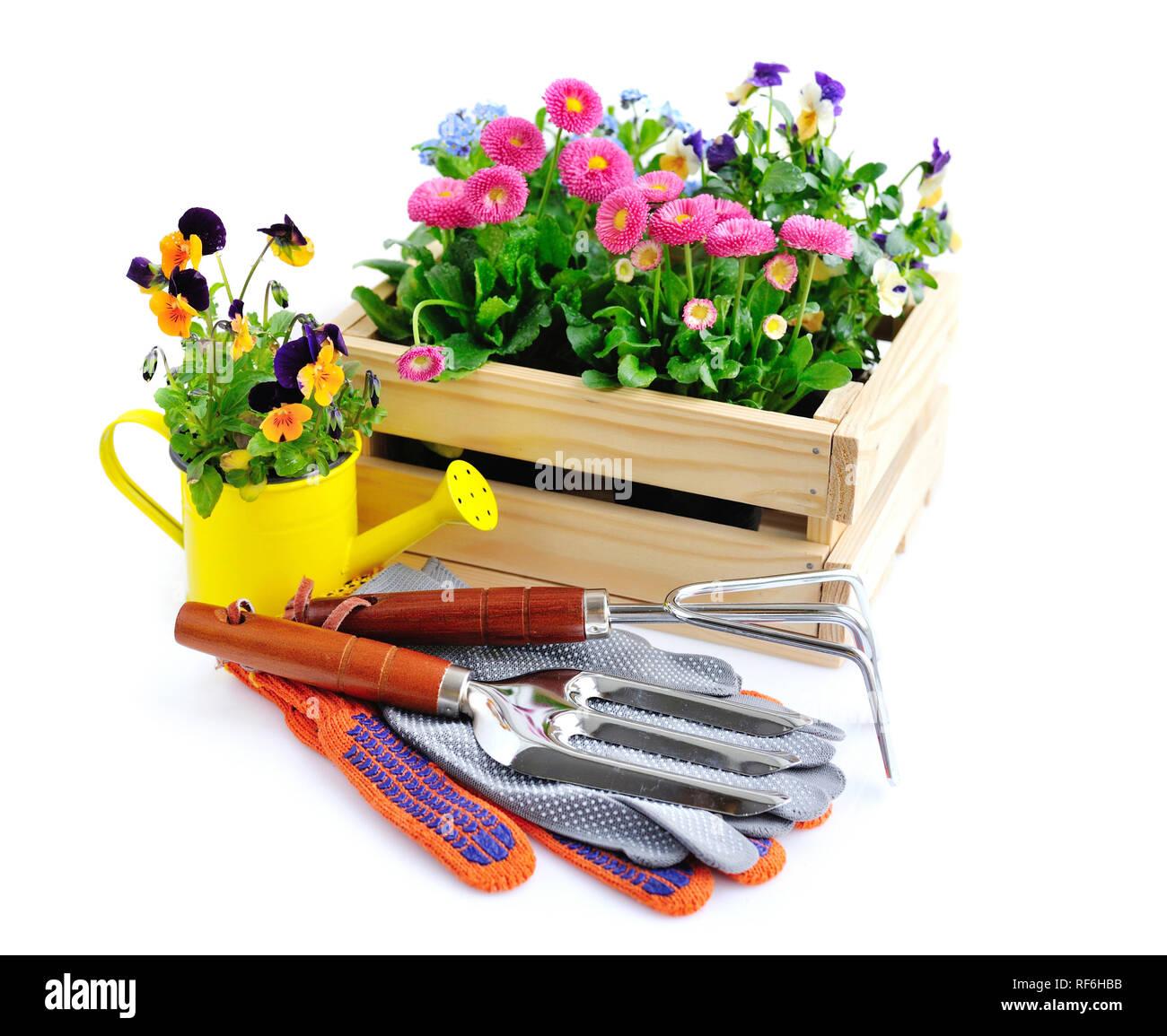 Giardinaggio E Fiori.Utensili Da Giardinaggio E Fiori Isolati Su Sfondo Bianco Foto