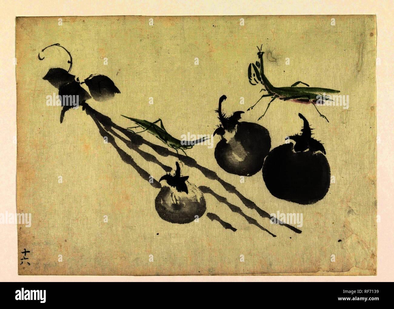 Cavallette con tre cachi. Relatore per parere: anonimo. Dating: 1800 - 1899. Luogo: il Giappone. Misurazioni: h 265 mm × W 364 mm. Museo: Rijksmuseum Amsterdam. Immagini Stock