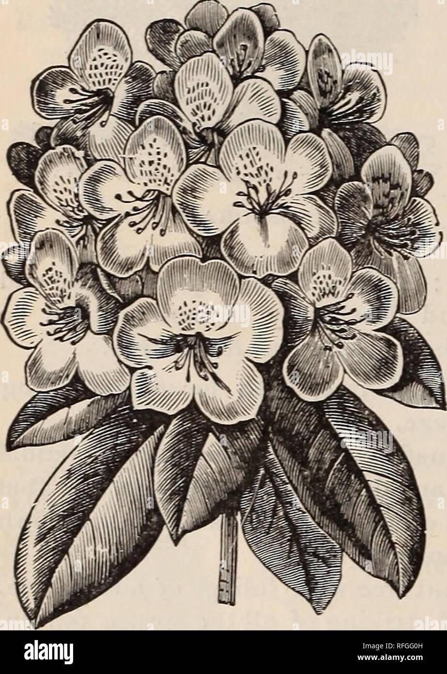 Piante Da Giardino Ombroso catalogo descrittivo : frutta e alberi ornamentali, arbusti