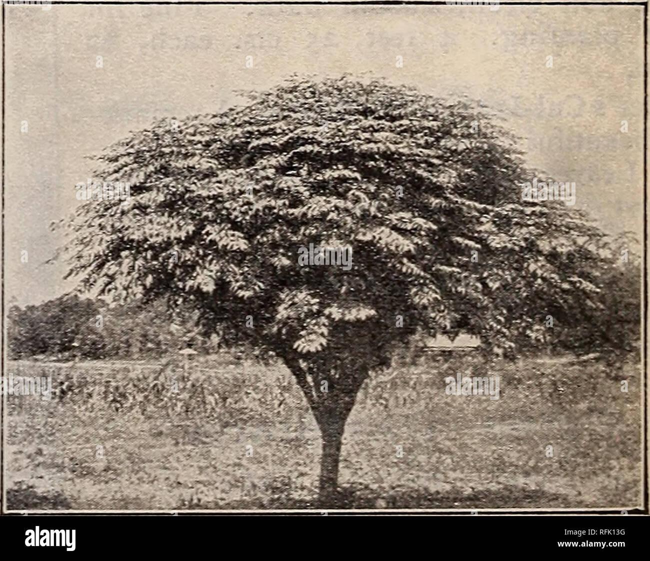 Piantare Alberi Di Paulonia paulownia imperialis immagini & paulownia imperialis fotos