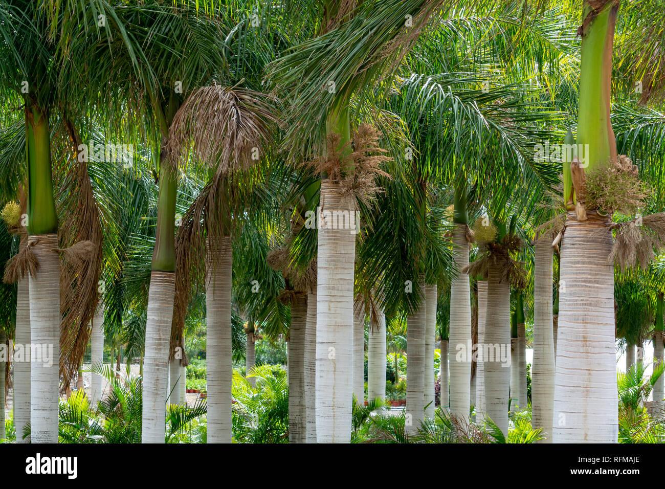 Palme Da Vaso Per Esterno filari di palme di cocco e diverse piante succulente in