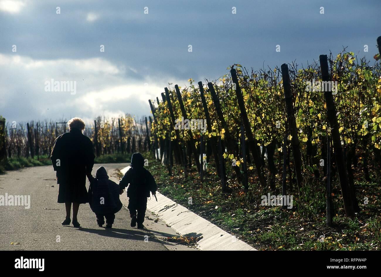 FRA, Francia, Ribeauville: nonna cammina con il suo grand i bambini nella vigna. Immagini Stock