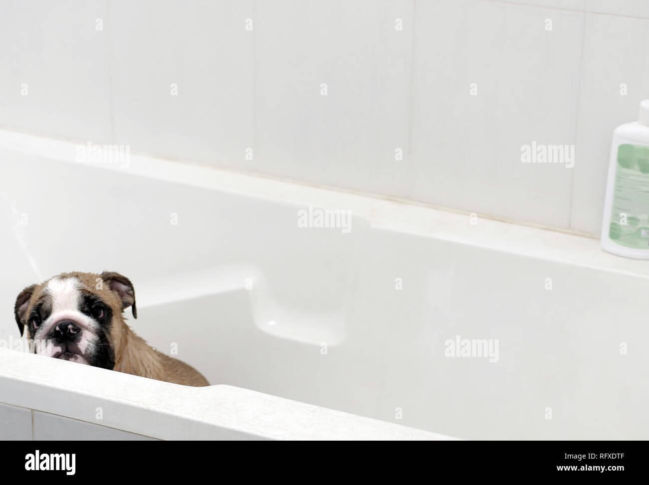 Vasca Da Bagno Di Inglese : Vasca da bagno stile inglese freestanding cm leona