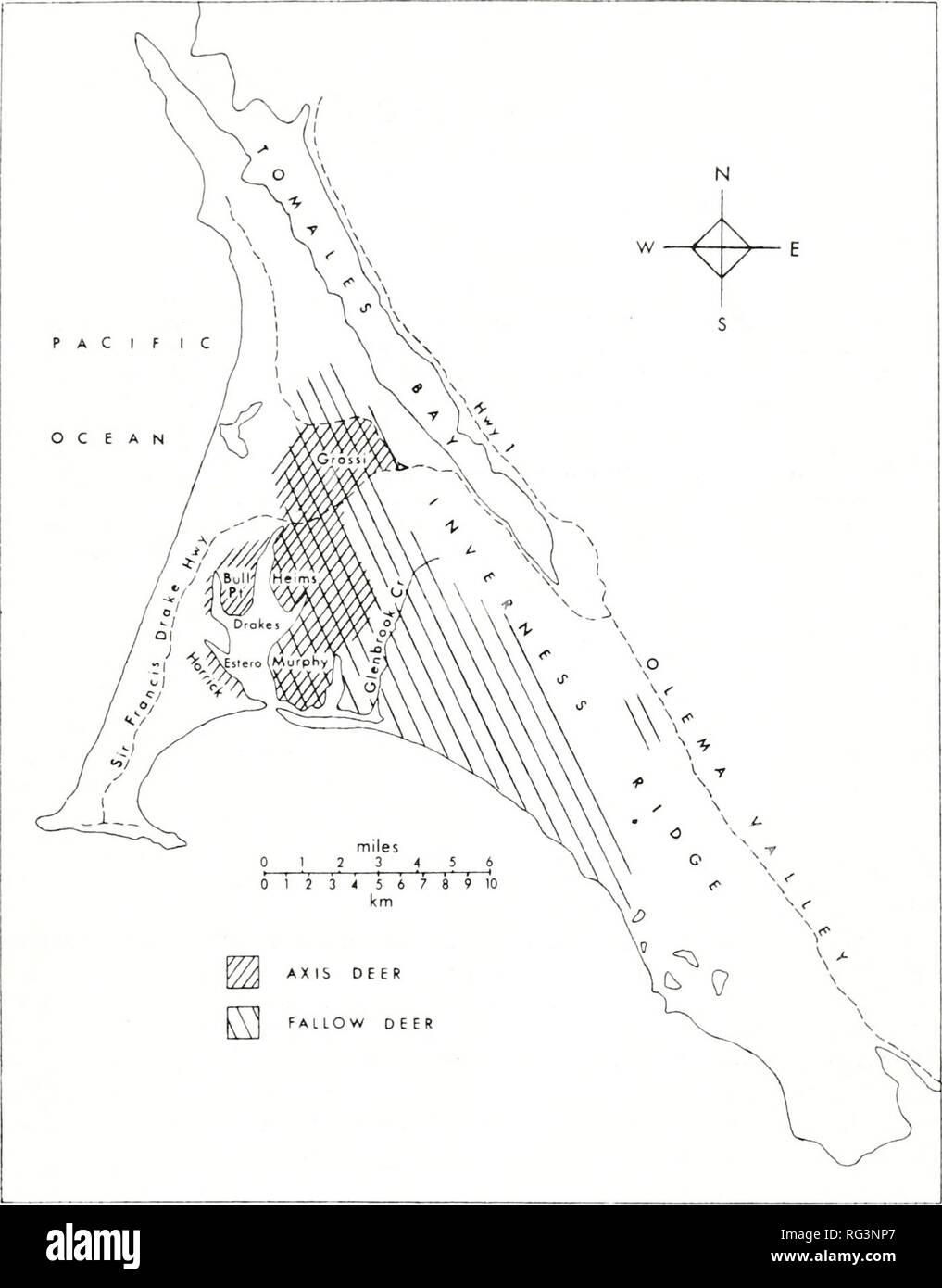 . California a base di pesce e selvaggina. Pesca -- California; gioco e gioco-uccelli -- California; Pesci -- California; popolazione animale gruppi; Pêches; Gibier; Poissons. Esotiche popolazioni di cervo al punto REYES 133. La figura 1. Gli intervalli di daini e cervi asse su Point Reyes National Seashore. Il pascolo di bestiame si verifica nella parte occidentale e la parte settentrionale del National Seashore; il suo confine orientale coincide con quella dell'asse deer gamma. I nomi di località fare riferimento alla famiglia nomi associati con i ranch. La precipitazione si verifica anche in forma di nebbia di avvezione, in particolare in estate. Questa nebbia, nonché fr Foto Stock
