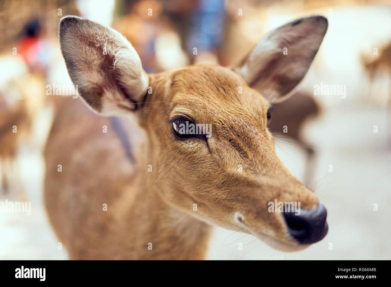 Close-up di testa di cervo Immagini Stock