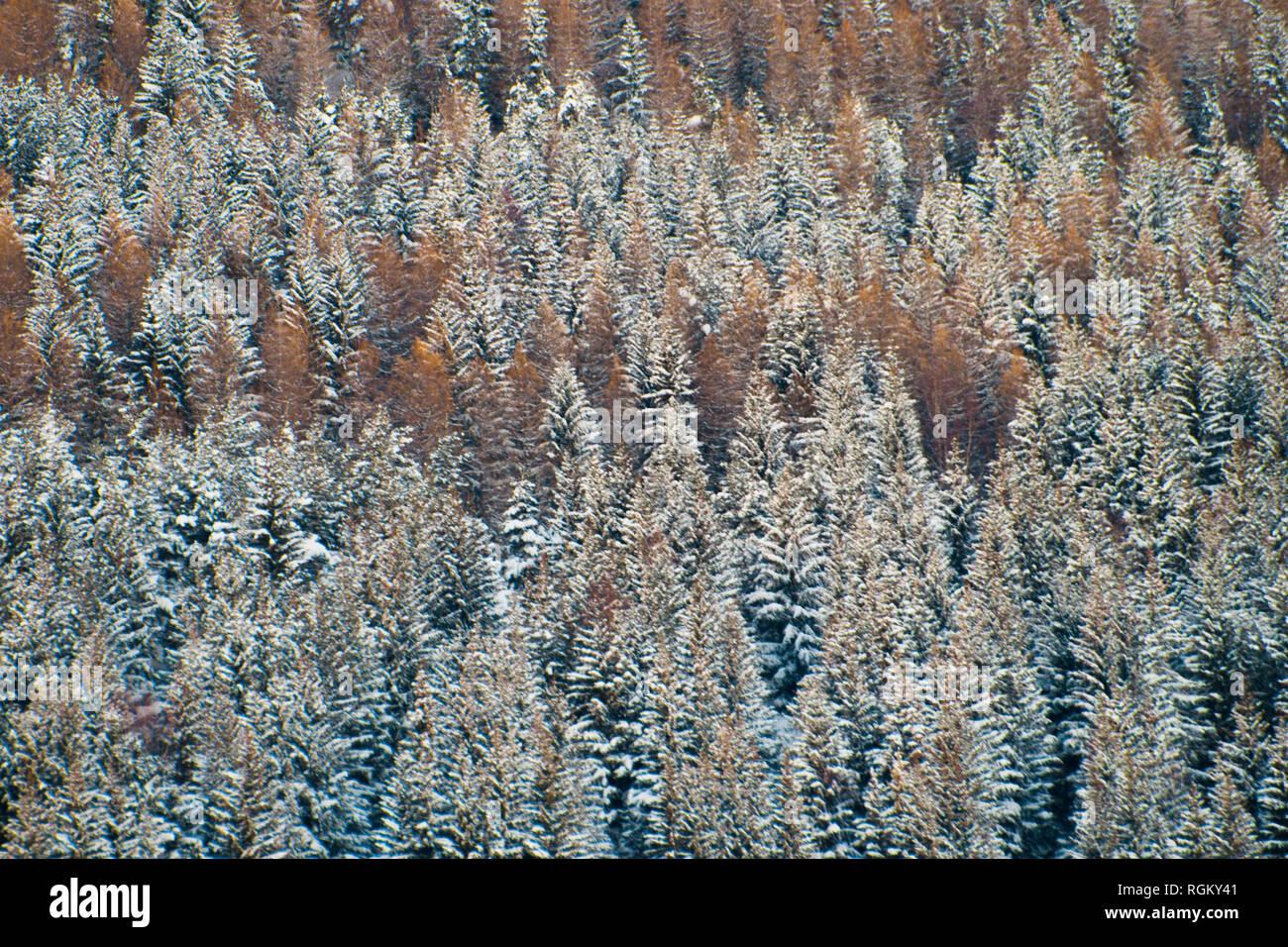 Telaio completo di boschi, arancione e nevoso mescolando insieme. In autunno e in inverno la rappresentanza. Four Seasons, l'inverno è venuta geometrica, sfondo lineare. Immagini Stock