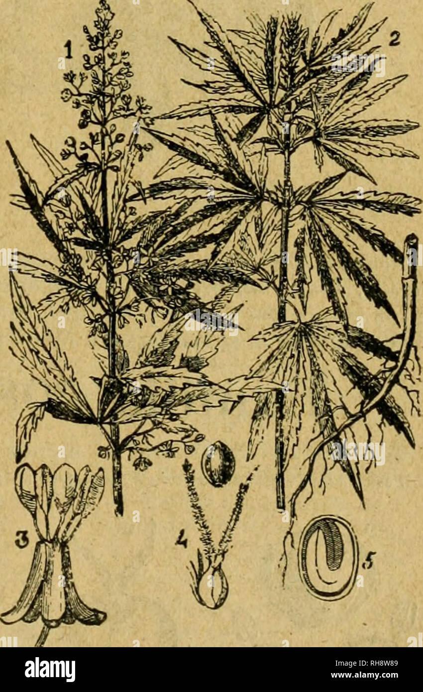 Botanica Descriptiva Compendio De La Flora Espanola Estudio De Las