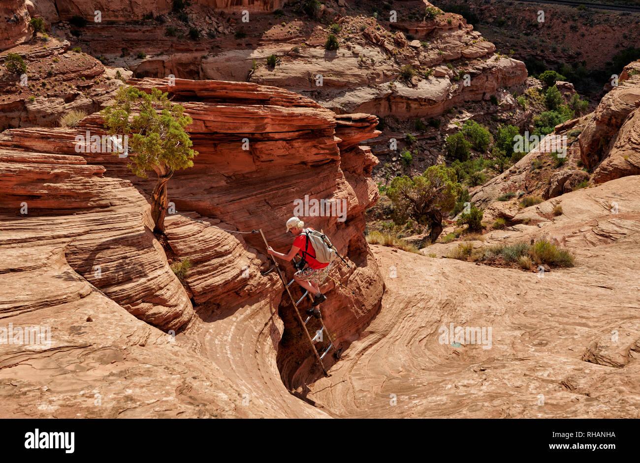 Escursionista vicino arco di corona si arrampica su una scala a pioli, Moab, Utah, USA, America del Nord Immagini Stock