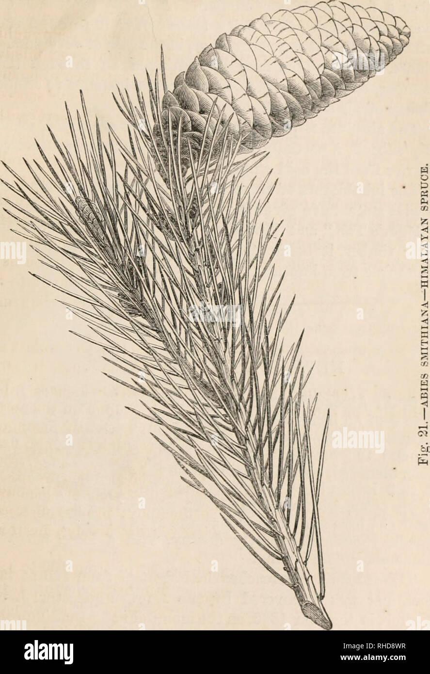 Foto Di Piante Sempreverdi il libro di sempreverdi, un pratico trattato sul coniferae