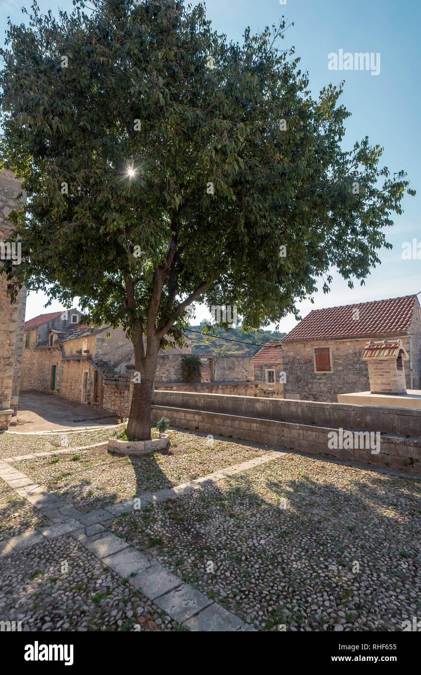 Un albero in Velo Grabje, Isola di Hvar, Croazia Immagini Stock