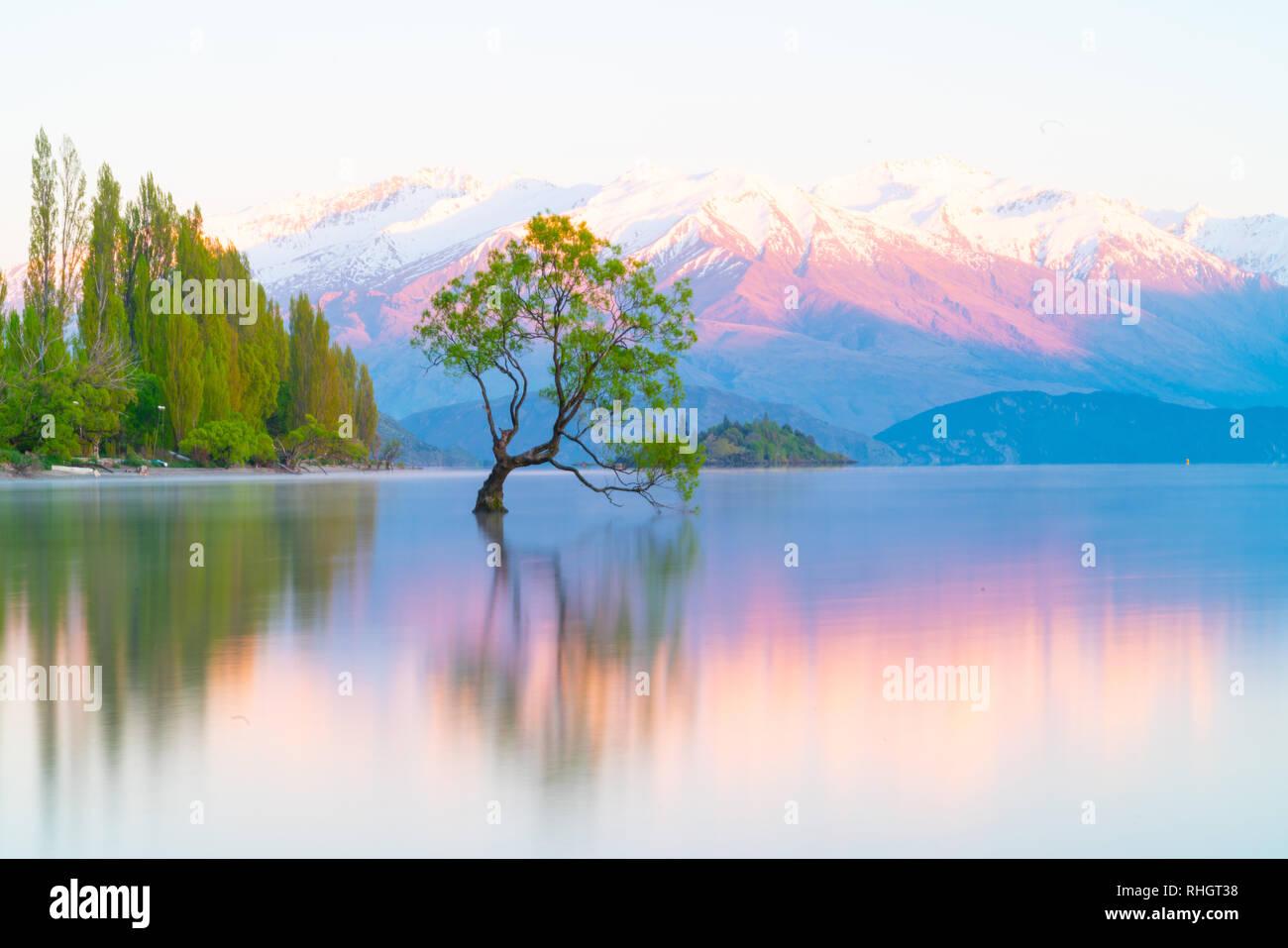 Che arriva a Wanaka Tree, Willow tree crescono in lago è meta turistica molto in scena a lunga esposizione con i colori del tramonto riflesso da montagne coperte di neve behin Foto Stock