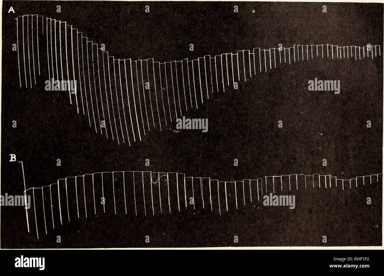 . Il bollettino biologico. Biologia; Zoologia; biologia; biologia marina. Fenomeni di aumento di spessore nel lombrico 307 di acetilcolina e che è stata antagonizzata da fisostigmina. Questo ha pensato era probabilmente un alta concentrazione di colina esterasi. Se acetilcolina è prodotta dalla stimolazione del lombrico preparazione muscolare, e se questo non è completamente idrolizzato dalle esterasi di colina prima della successiva stimolazione, la persistenza di acetilcolina potrebbe essere la causa dell'aumento delle risposte. L'applicazione di phy- sostigmine che impedisce l'azione di colina esterasi potrebbe quindi s Foto Stock