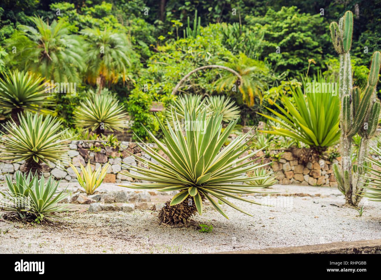 Piante Grasse Piccole Prezzi parco di cactus e piante grasse. in prossimità di piccole