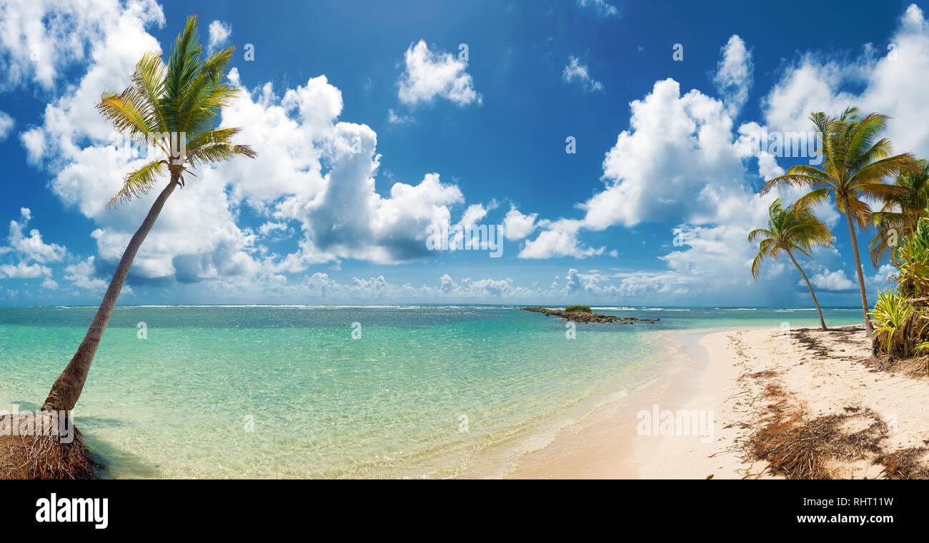 Blue sky,alberi di noci di cocco, acque turchesi e sabbia dorata, vista panoramica della spiaggia di Caravelle, Saint Anne Guadalupa, French West Indies. Foto Stock