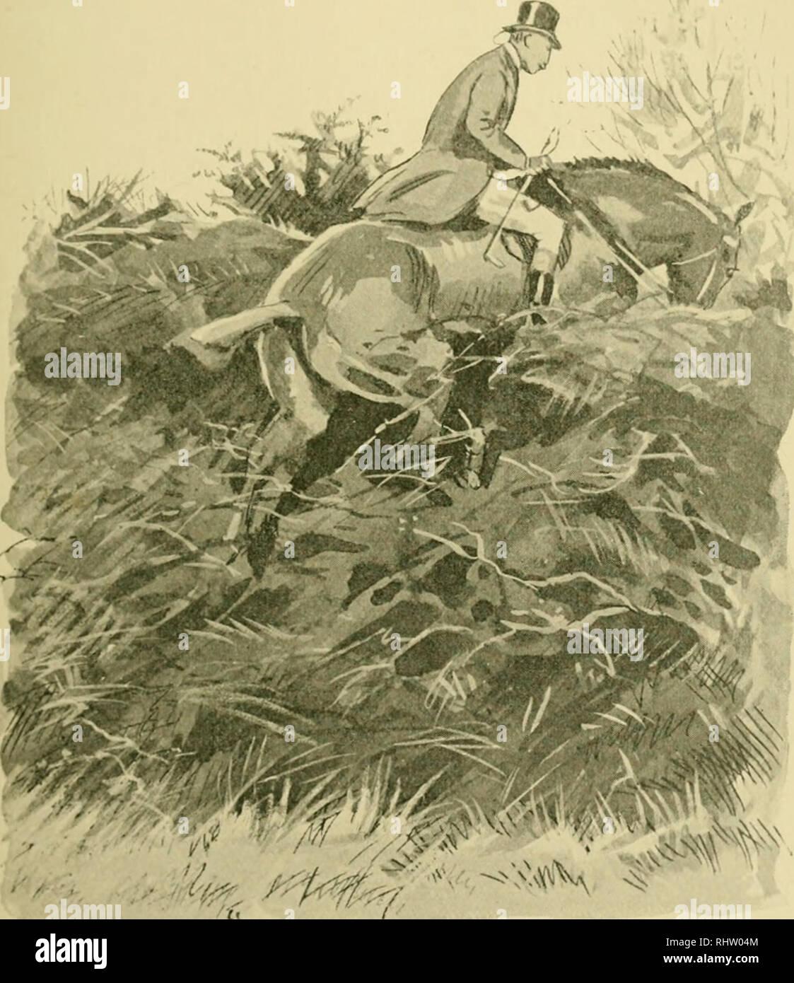 Cavallo Giocattolo Inglese Immagini & Cavallo Giocattolo