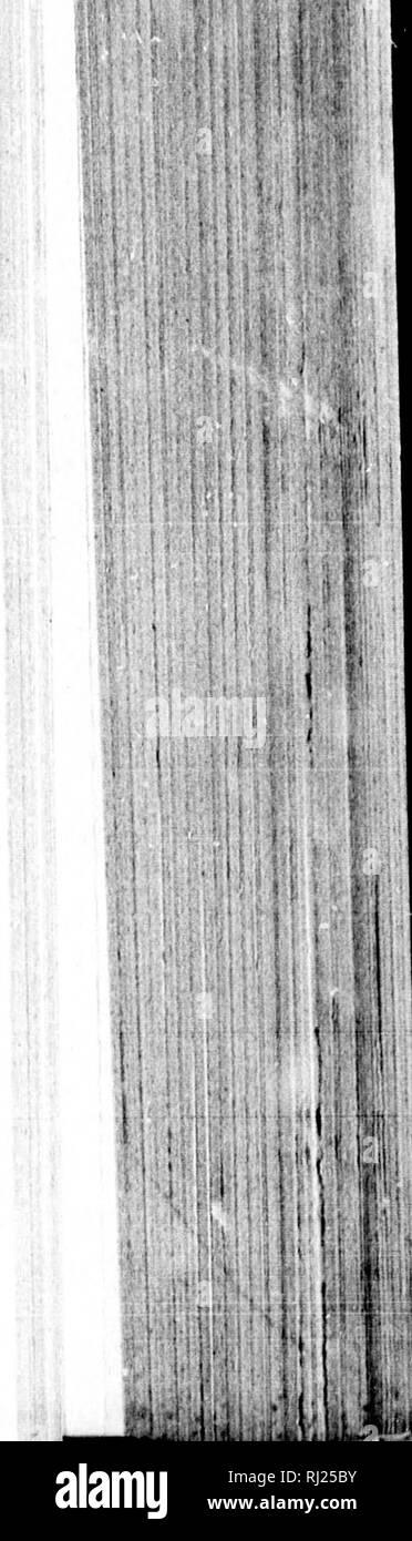 . La storia del piantone posteriore della Emin Pasha relief expedition [microformati] . Per gli esploratori; uccelli; insetti; Explorateurs; Oiseaux; Insectes. II â jpP. Si prega di notare che queste immagini vengono estratte dalla pagina sottoposta a scansione di immagini che possono essere state migliorate digitalmente per la leggibilità - Colorazione e aspetto di queste illustrazioni potrebbero non perfettamente assomigliano al lavoro originale. Jameson, James S. (James Sligo), 1856-1888; Jameson, James S. Il Sig. Toronto : Rose Pub. Co. Immagini Stock