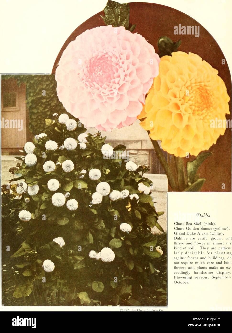 Fiori Di Stagione Settembre chase frutta e fiori nel in colori naturali;. frutta; fiori