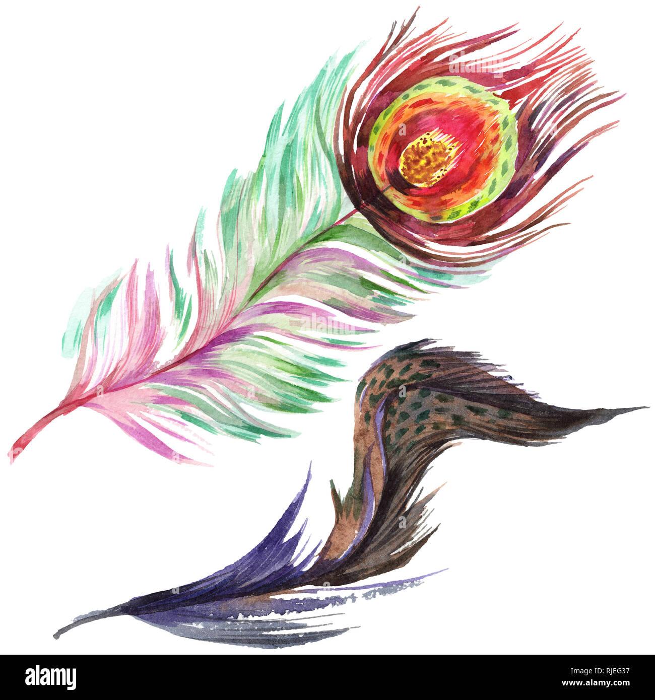 Uccello variopinto giù da ala isolato. Aquarelle giù per lo sfondo. Illustrazione ad acquerello set. Disegno ad acquerello fashion aquarelle isolare Foto Stock