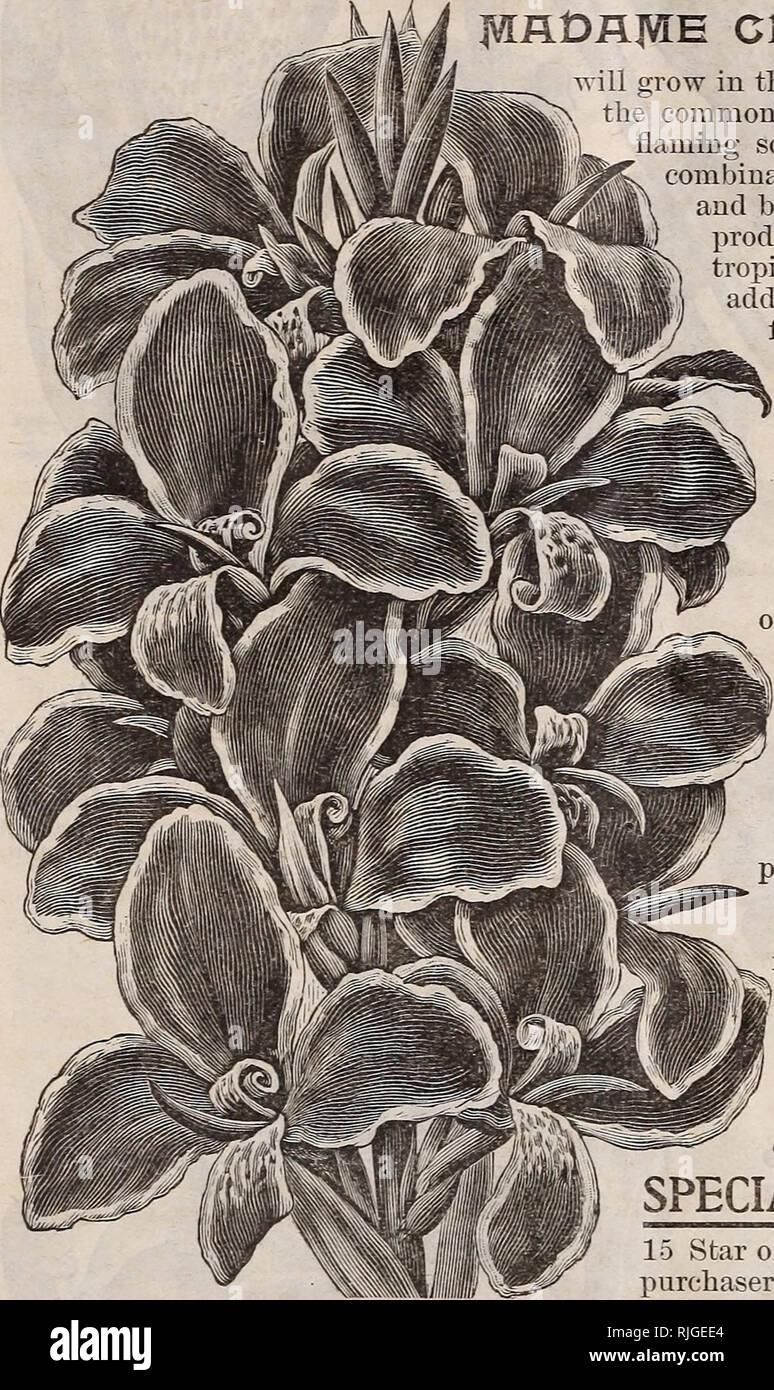 Catalogo di Scott s rose e altri bellissimi fiori. Vivai (orticoltura)  Pennsylvania Philadelphia . 0cb7f1cb90c