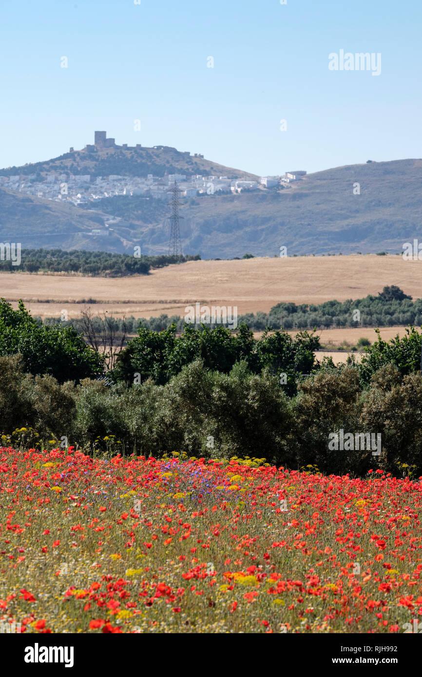 Papaveri rossi, Papaver rhoeas, in campo con il castello di Teba in background. Almargen, Malaga, Spagna Immagini Stock