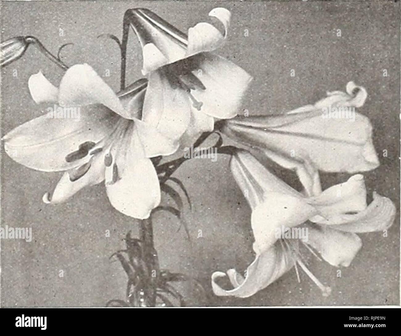 Rampicanti Che Crescono All Ombra autunno 1931 : lampadine semi di arbusti e alberi. alberi da