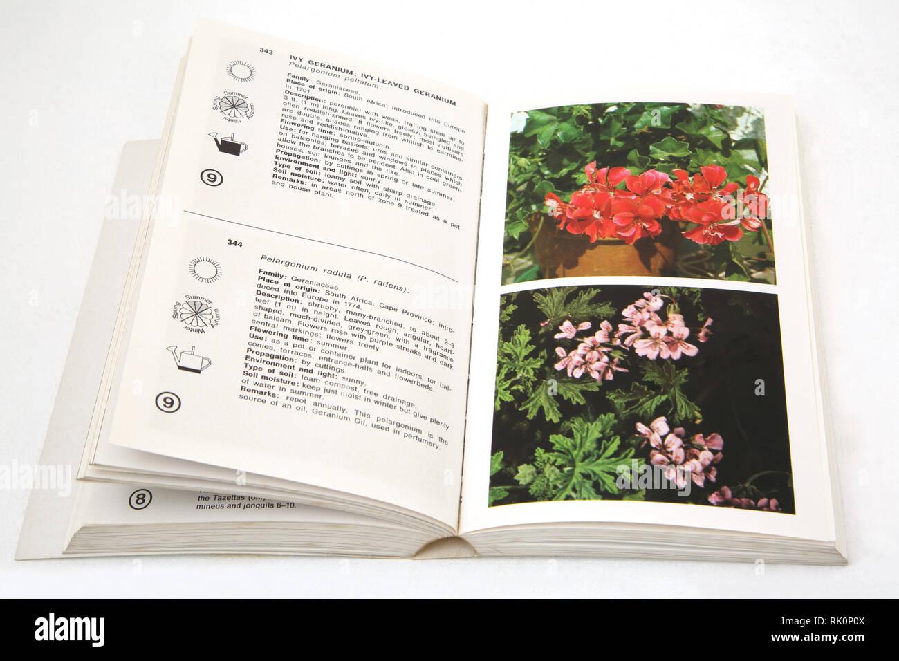 Immagini Piante E Fiori il macdonald enciclopedia di piante e fiori foto stock - alamy