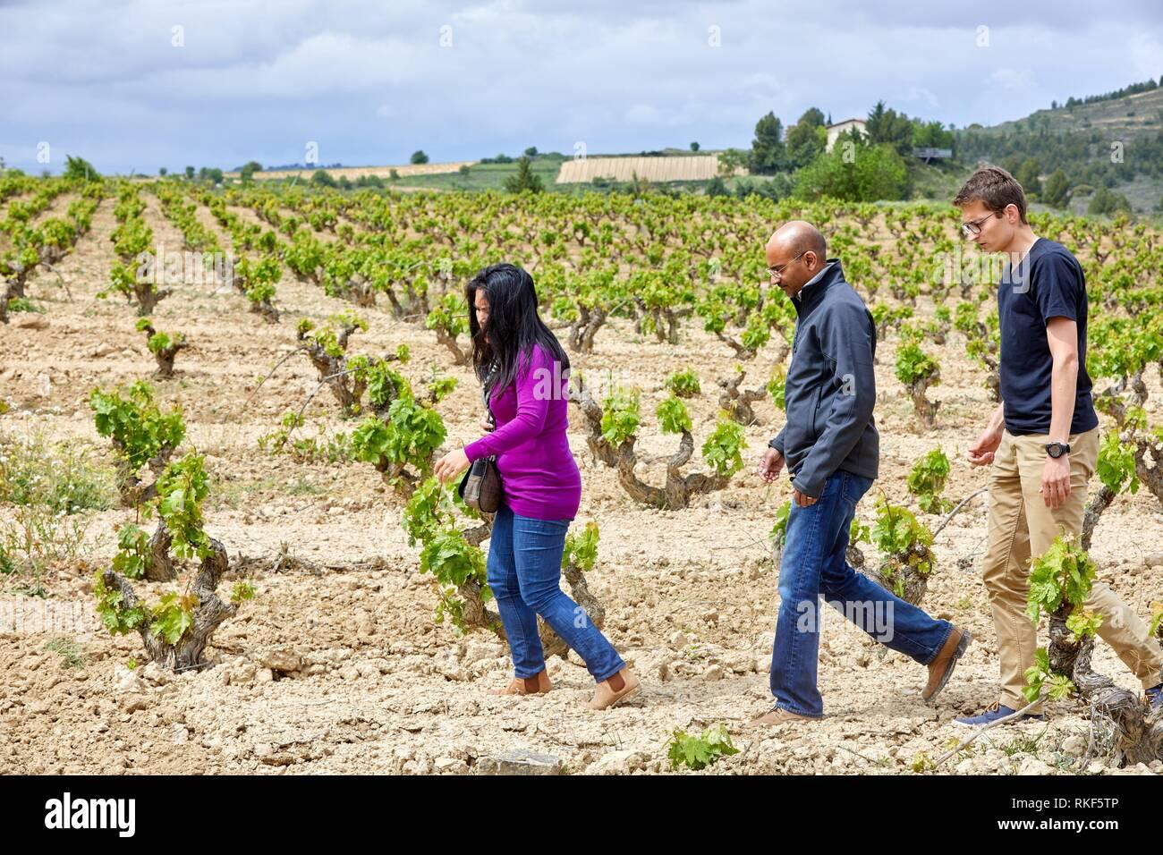 Guida con coppia di turisti, vigneto, Elciego, Rioja Alavesa, Araba, Paesi Baschi, Spagna, Europa Immagini Stock