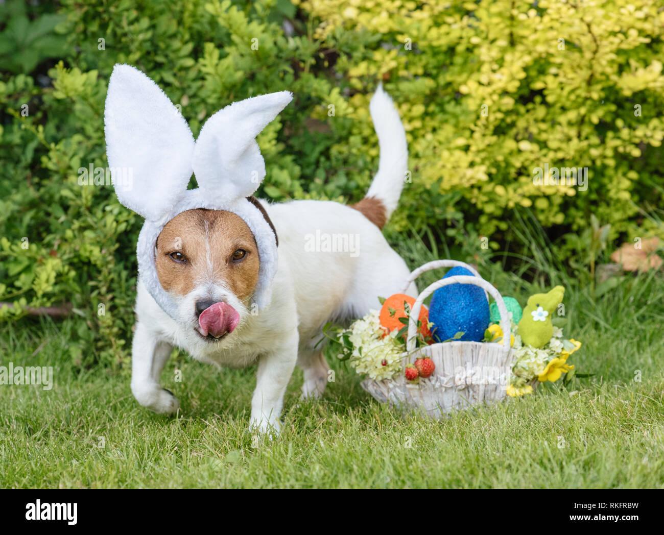 Uovo Di Pasqua Il Concetto Di Suoneria Con Il Cane Alla Ricerca Per