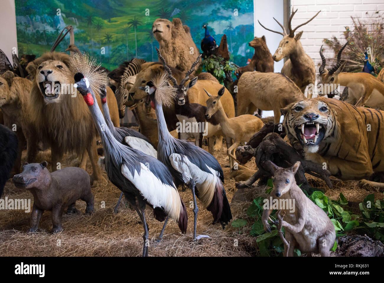 Medellin, Antioquia, Colombia: Museo di Scienze Naturali, Università de Antioquia. Immagini Stock