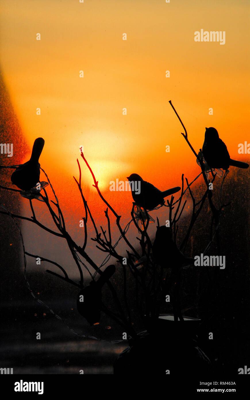 """Fortuneswell, isola di Portland. Il 13 febbraio 2019. """"Jenny' wrens raccogliere al tramonto sull'isola di Portland, su uno dei primi giorni di avere una vera e propria sensazione di primavera su di esso. Si tratta di un suggestivo scenario . . . Anche se il """"wrens' sono effettivamente luci da giardino. Credito: stuart fretwell/Alamy Live News Immagini Stock"""