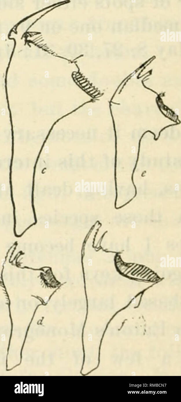 Immagini di pennis