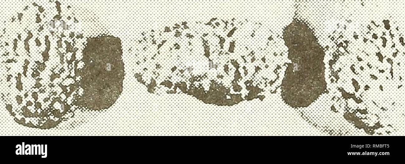 . Relazione annuale - società occidentale di Malacologists. Molluschi; molluschi. Il colore, la forma dei gusci, la morfologia delle parti morbide e la radula sono alcuni dei punti di riferimento su cui la sistematica sono basati (Inaba, 1965); la interrelazione- nave tra impatto ambientale barriere geografiche, età degli organismi e altri fattori che caratterizzano la spteciation, adattamento e selezione tra popolazioni (Inaba, 1965 e Burch, 1960). Più precisamente le tecniche sono necessarie per aiutarci nella descrizione, identificazione e localizzazione di specie e sottospecie. Il dolore, 1964, dice che il genere Vinaccia Immagini Stock