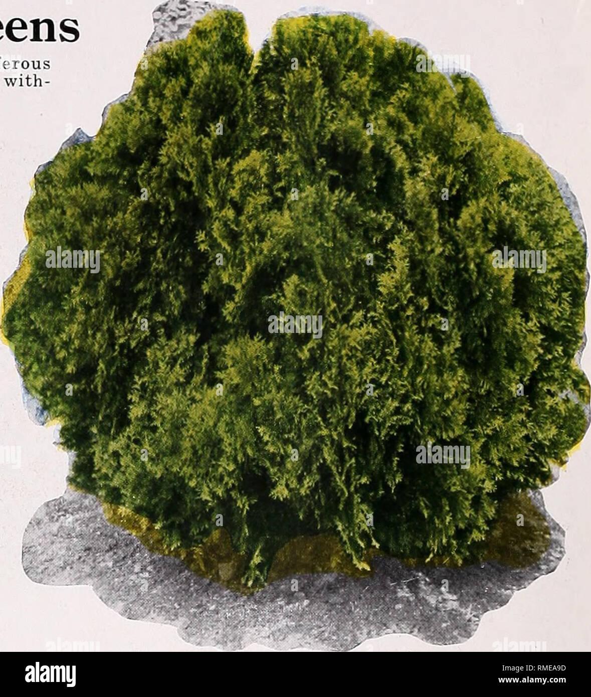 Tipi Di Piante Sempreverdi catalogo annuale : alta qualità alberi, arbusti sempreverdi
