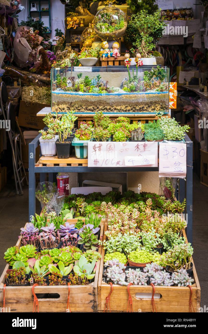 Succulente in vendita presso un negozio lungo il Mercato dei Fiori Road, Prince Edward, Kowloon, Hong Kong Foto Stock