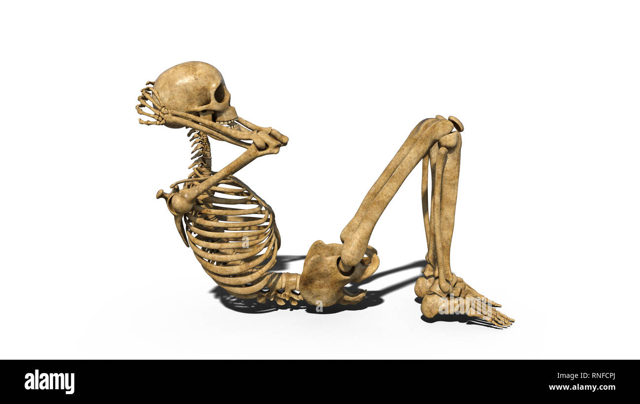 Muscles Of The Skull Immagini Muscles Of The Skull Fotos Stock Alamy