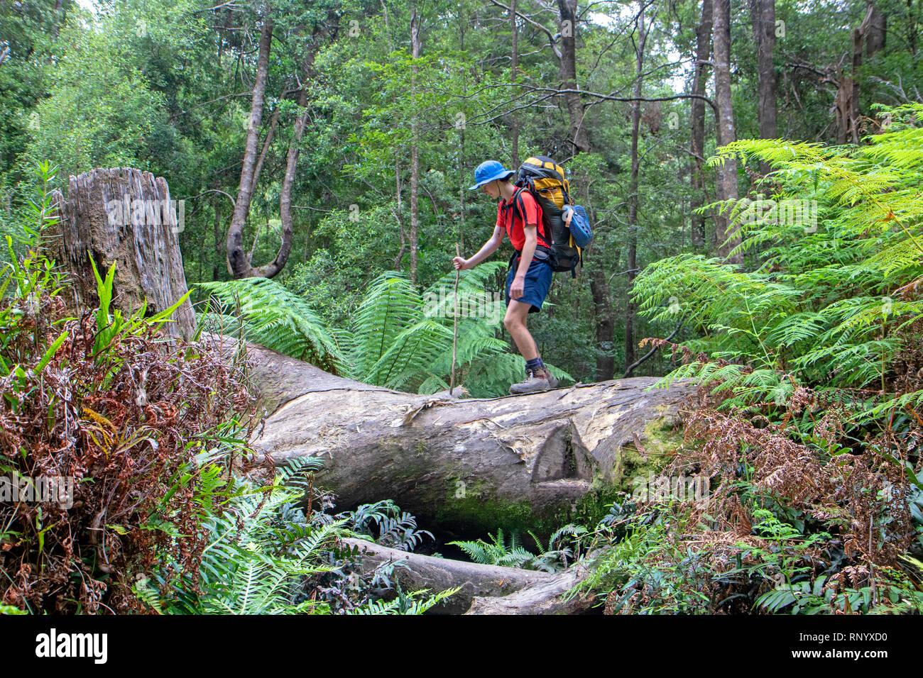 Ragazzo salendo su un albero caduto sulla costa sud via Foto Stock