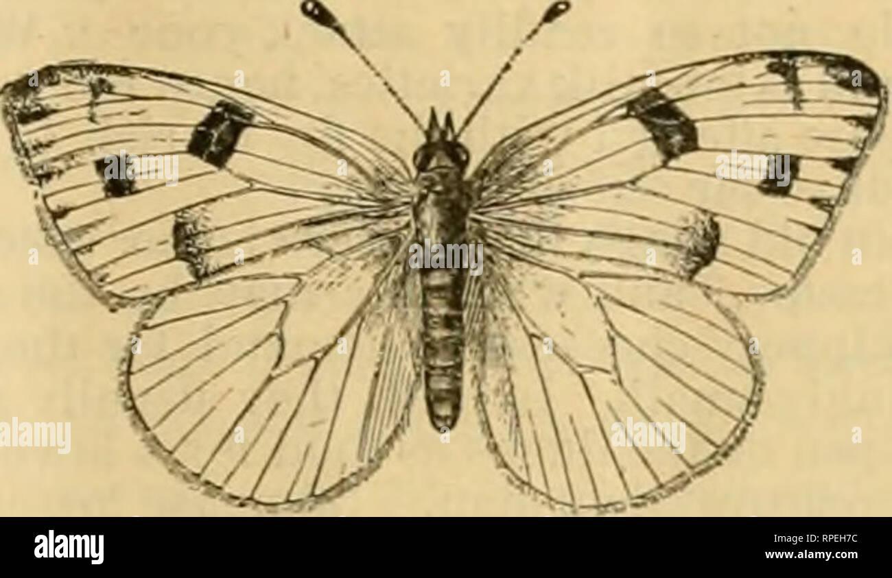 La American Entomologo Entomologia La Larva Fig 54 A Puo