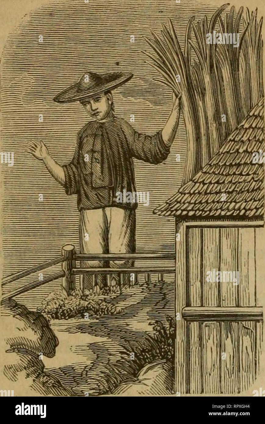 . Album der Natuur. 368 - vroegeren tijd daaromtrent gegeven, zijn ons echter su niet bekend geworden, en de oorsprong van het rijstpapier heeft alzoo destrieri behoord tot ^e,volkssagen, van Indie tot ons overgewaaid. De naam rijstpapier geeft aanlei- dins:, dat velen meenen dat het O' van rijst wordt gemaakt. Op Java, waar zoo veel Chinezen zijn, en van waar ook het rijst- papier 't geen uomini hier nu en dan ziet, aangebragt wordt, wordt zoo verre ons bewust è, geen zoodanig fabriekaat ge- maakt. In de twee laatste ja- ren è hierover eenig meer licht verspreid geworden, hoe wel wrj, in deze zaak, Immagini Stock