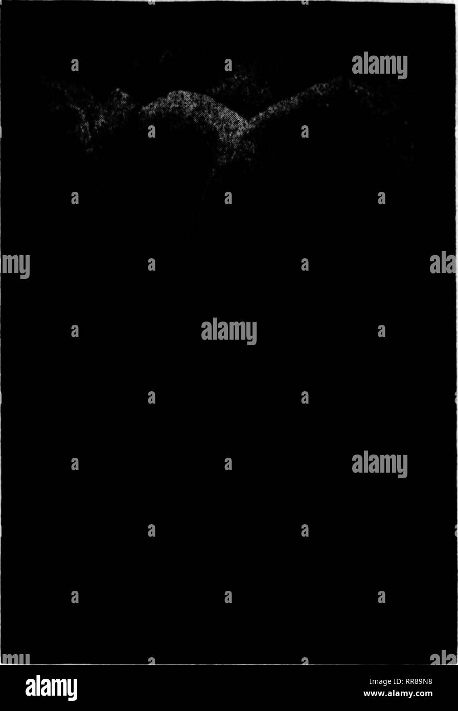 """. Fioristi' review [microformati]. Floricoltura. OCIOBBB 12, 1922 i fioristi^ Review è la sede della lampadina. Primo singolo dimensioni denominato giacinti Olty di Ka""""rl""""m, orolden giallo. Ocrtrad*, rosa luminoso. GUrantca, rosa carne. Orand Maltro, luminosa porcellana. Kiajr di Bines, blu profondo. Xin? Di Tellowi, giallo arancio. Kady Derby, delicato rosa. Fxlco di sopra, 97.60 Jtu Orandesae, enow bianco. K'Umooenco, bianco puro. Moreno, deep rose. Qnecn del tbe Blues, blu argenteo. Regina di Finks, rosa brillante. Bol des Belyes, rosso profondo. Tellow martello, giallo puro, per 100; per 1000, $65.00 singolo secondo dimensioni denominato H Foto Stock"""