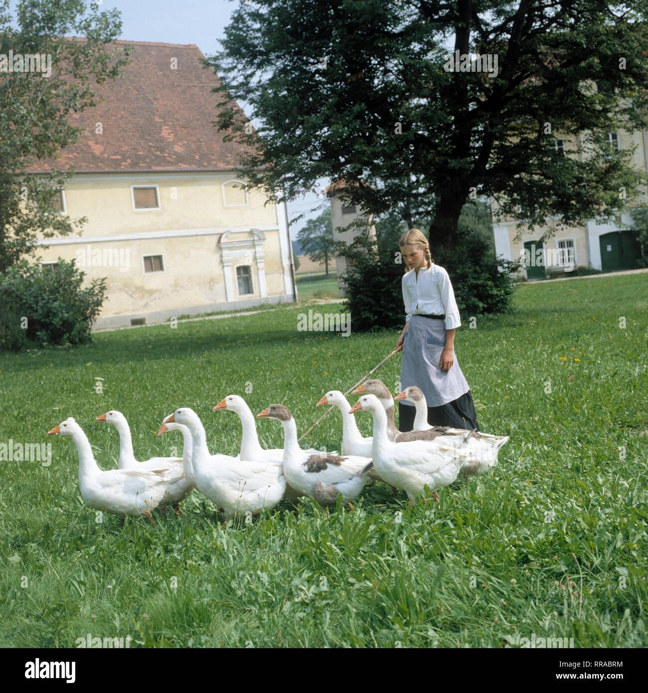 DER TROTZKOPF / BRD 1983 / Helmut Ashley / TV-Mehrteiler von 1983: Ein Mädchen mit Gänsen. EM / Schüte / Überschrift: DER TROTZKOPF / BRD 1983 Immagini Stock