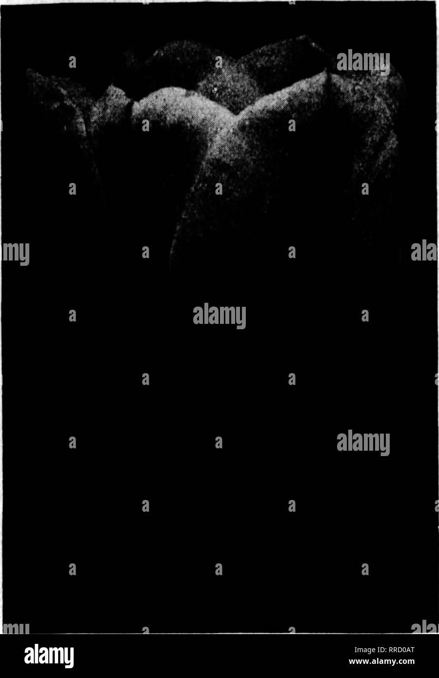 . Fioristi' review [microformati]. Floricoltura. OCTOBKK 0. 1921 i fioristi' Riesaminare 111 sede della lampadina. Primo singolo dimensioni denominato giacinti Amy, luminoso carmine. Brltlah Regina, bianco puro. Clias. Dickens blu, porcellana. Csar Pietro, porcellana. Oertmde, rosa luminoso. aisrantea, rosa carne. Orand Maltre, luminosa porcellana. Xing' di Blues, blu profondo. Xing' di Tellows, giallo arancio. Prezzo di sopra, $7.50 ]Lady Derby, delicato rosa. Zia O-randesse, Snow White. ^innocenza, bianco puro. Moreno, deep rose. Regina del tbe Blues, blu argenteo. Regina di rosa, rosa brillante. Boi des Beiges, rosso profondo. Tellow Immagini Stock