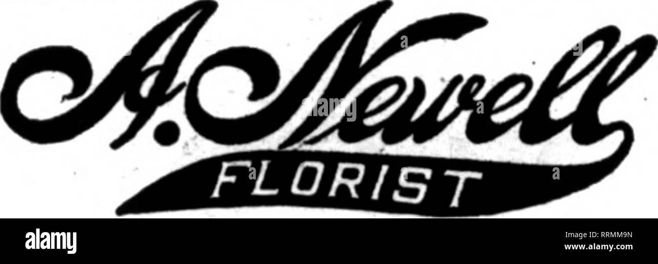""". Fioristi' review [microformati]. Floricoltura. Th0 flortst* la cui oards appaiono sulla tbo pacoo oarnrlnc questo haad* sono prop""""R""""d fino a ordoni """"o- da otbor llortat* per looal doilTory su tho vaual base* ST. LOUIS, MO. Filo o Pbone gli ordini di viaggio te tbe HOUSK DI FLOWKRS Ostertag Bros. Il più grande Retail Supply Hcuse nel West Jefferson e WaBliing""""ton Avenue CHAS. BEYER FLOmST 3619 S""""ulu Orand Avenua a lunga distanza telefoni*."""" Bell, Sidney 143-Kinloch. Victor 899 ST. LOUIS, MO. EORGE SEGALA """"Alcuni fioraio"""" Th* Plaza Ft. Smith, Krk.. Istituito oltre venti anni li E. oo. Decimo e Grand Ave., K Immagini Stock"""
