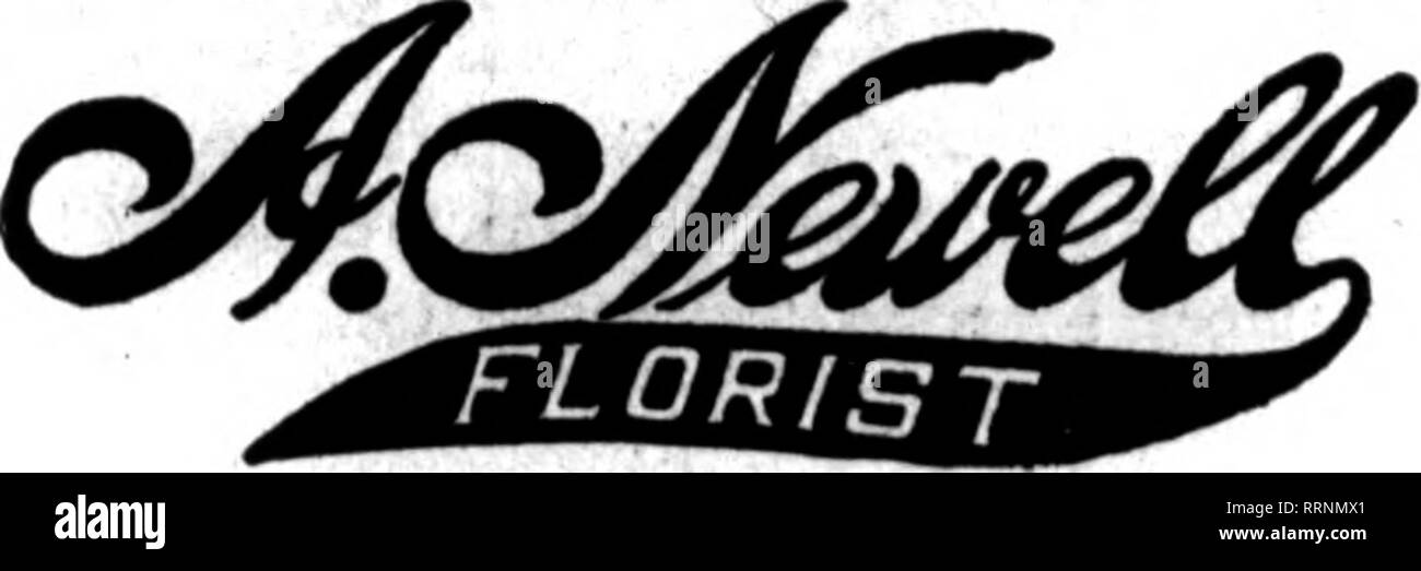 """. Fioristi' review [microformati]. Floricoltura. KANSAS CITY, ... MISSOURI... yVILLIAM L. Flower Rock membri di azienda fioristi' Consegna del telegrafo Aas'n. Samuel Murray Kansas City, MO. 1017 GRAND AVE. M""""mb#r off tha fioristi' Tolograph Dollvory ass'n. Stabilito più di vent anni 11 rar. lOth awl smerigliare Ave."""" KANSAS CITY. MO. GEO. M. KELLOGG fiore pianta it CO. E Wholasala RotaU Fiorista 1122 Orand Ava. KANSAS CITY. MO. Tutti i tipi off FIORI RECISI i.n la loro stagione. Anche rosa e piante di garofano in stagione. Qreenbouses a Pleasant Hill. Mo. una carta di questa dimensione costa solo 70c p""""r settimana su ordine Tearlr esso w Immagini Stock"""